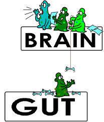 Brain Gut Bacteria
